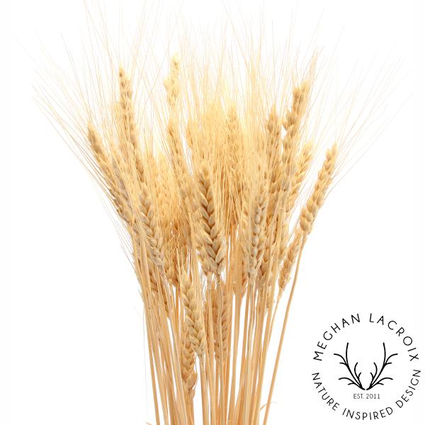 Wheat -
