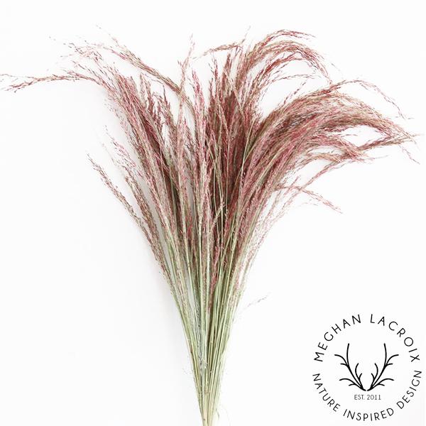 Red Silk Grass -