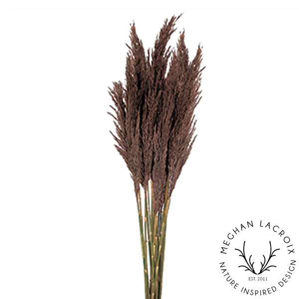 Plume Reed Grass - Chocolate -