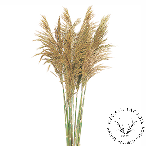 Plume Reed Grass - Natural -