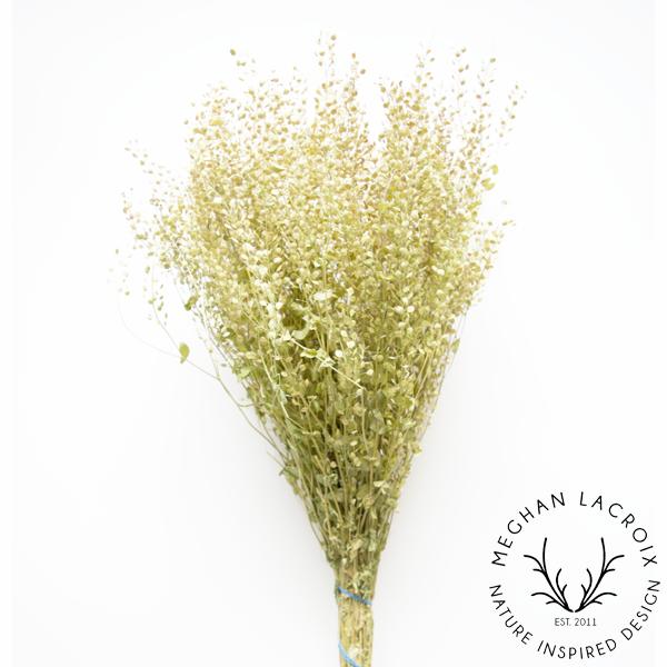 Peppergrass -