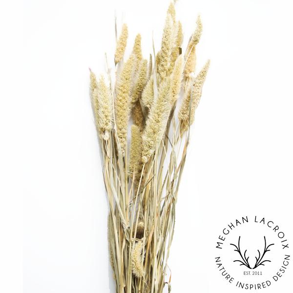Foxtail Millet -