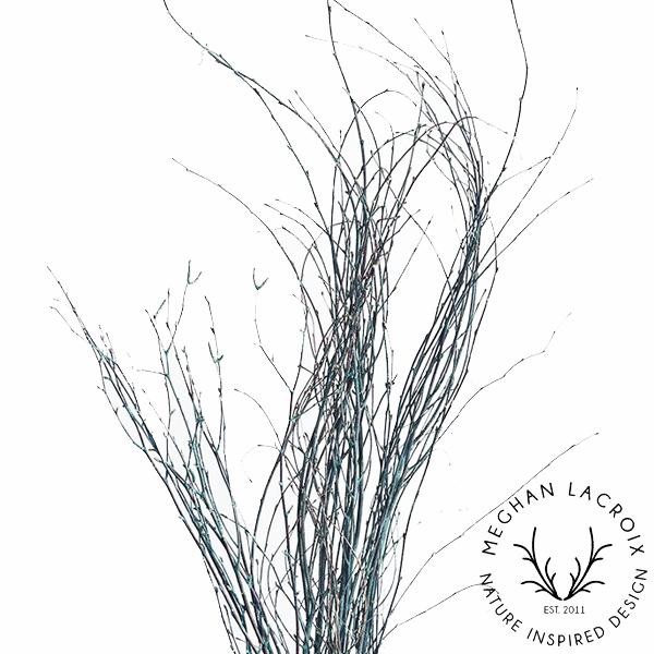 Birch Branches - Blue -