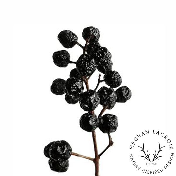 Privet Berries -
