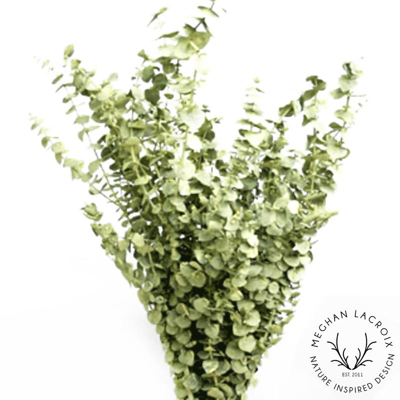 Spiral Eucalyptus - Chartreuse -