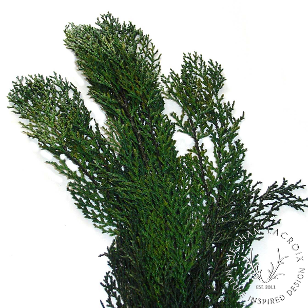 Book Pine -