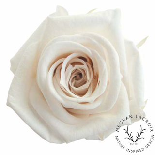 Panna Cotta Roses