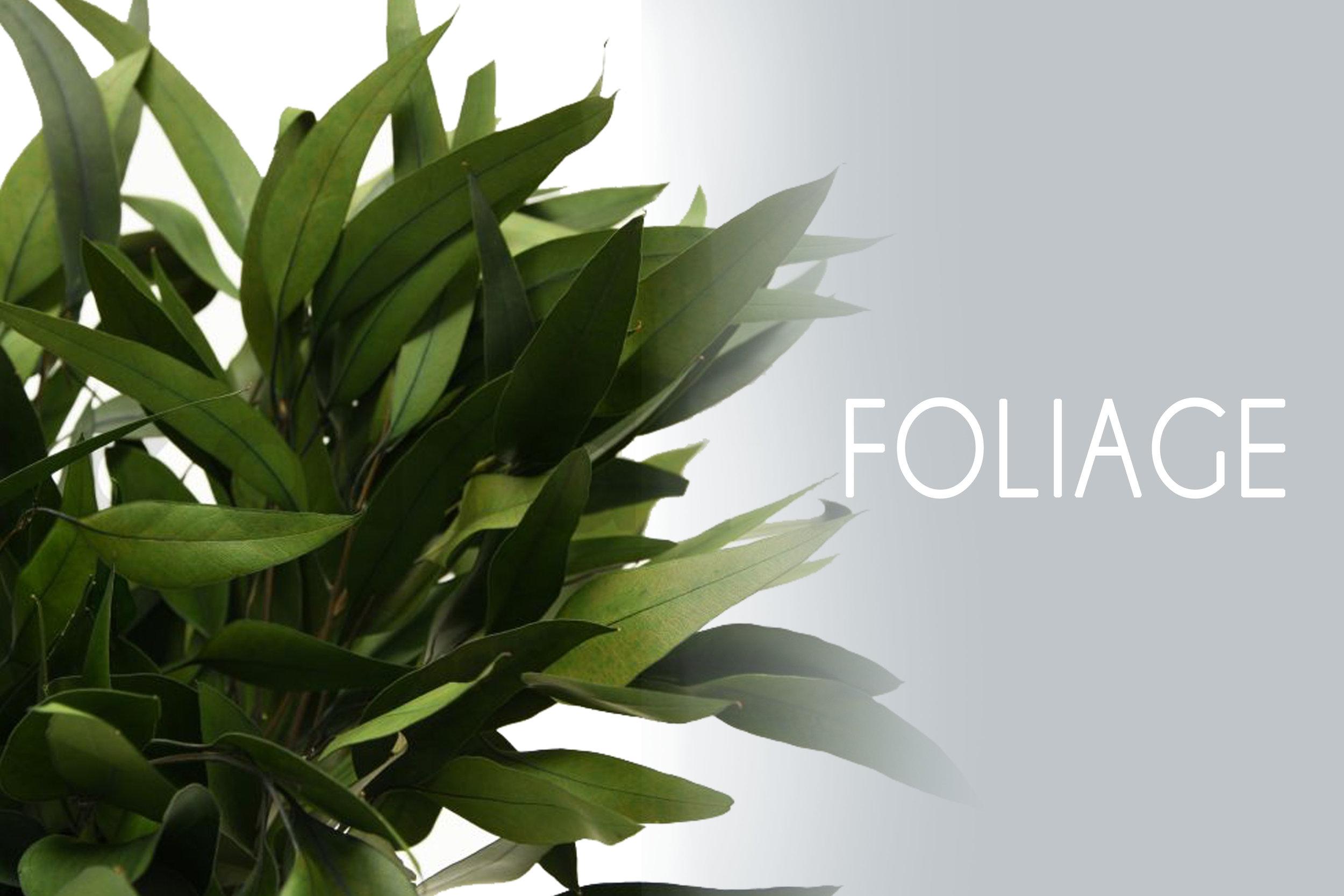 - ALLEucalyptusFernsEvergreensSalalMiscellaneous