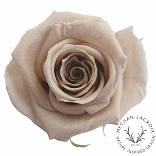 Hazelnut Roses