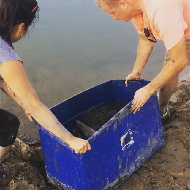 Releasing the fish into the Trinity River. Approximately, 60 Carp and Alligator Gar were relocated from a 15 foot long puddle back to the Trinity River over a two day period.