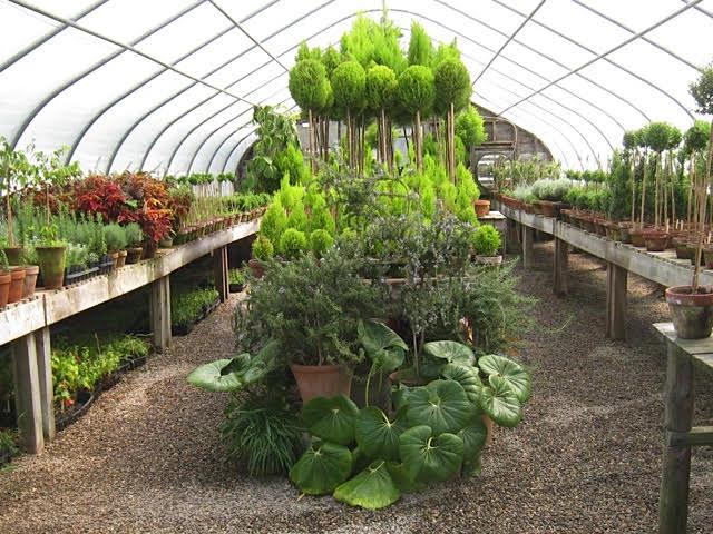 snug greenhouse.jpg