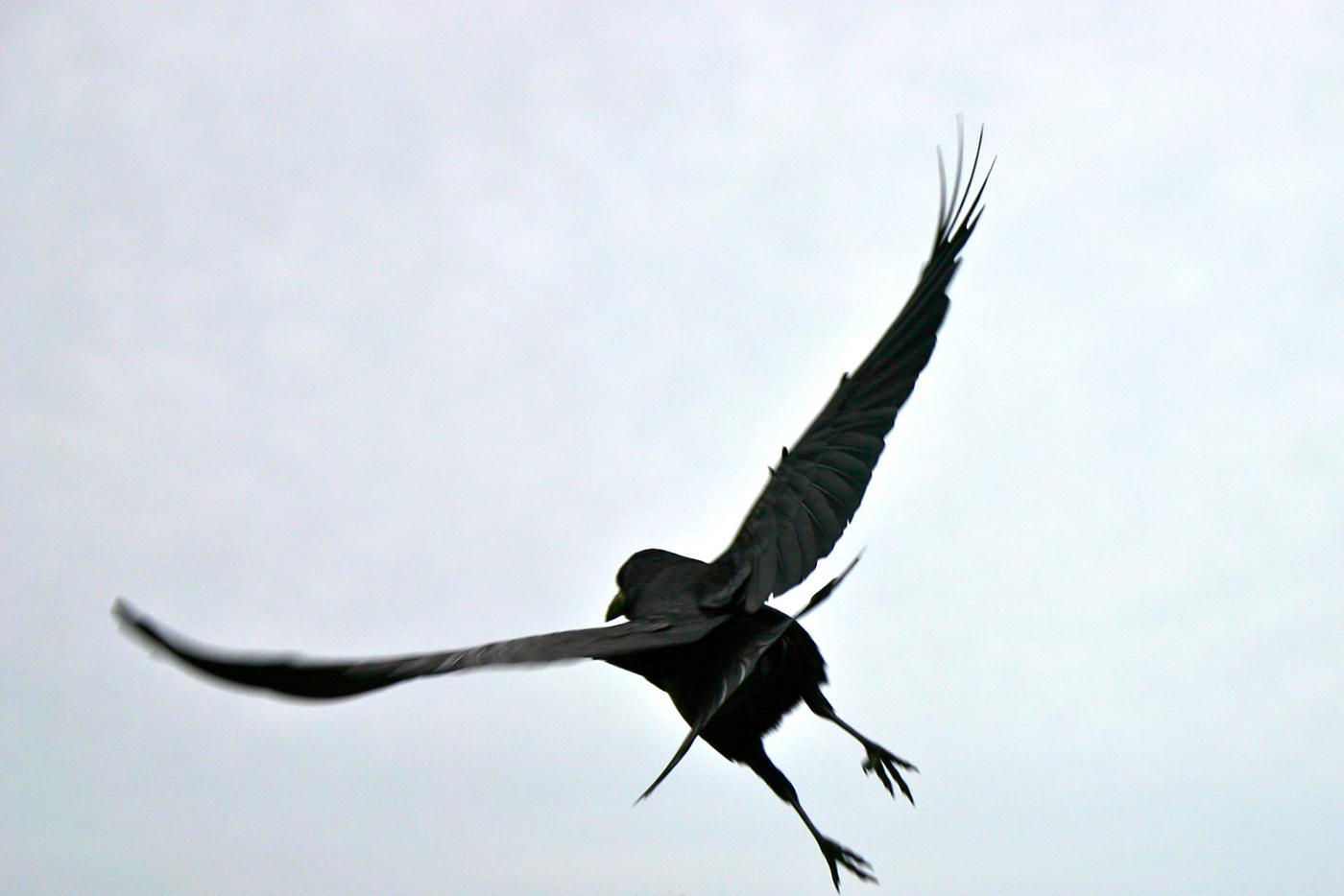 Raven, 2010