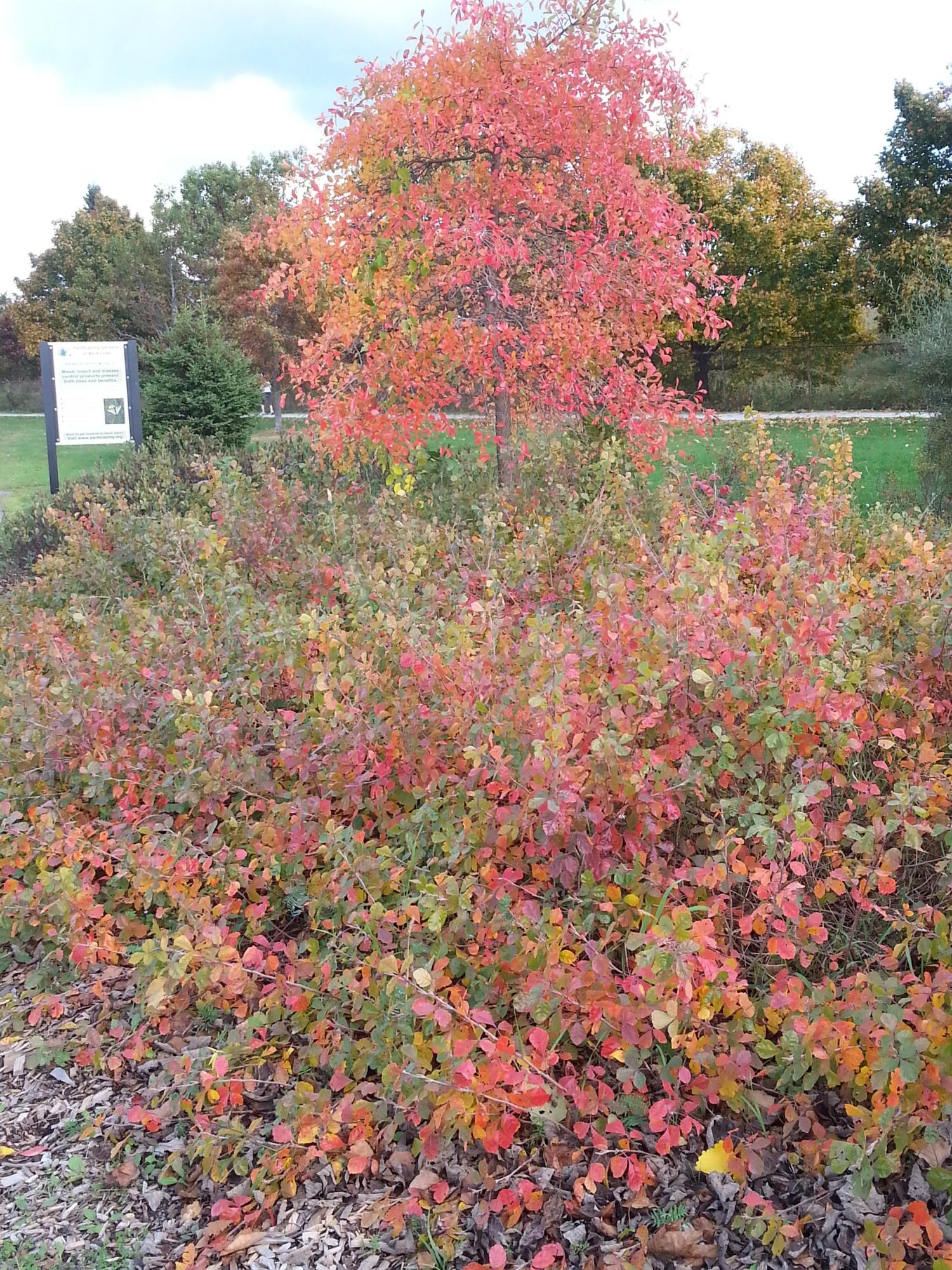 late season color