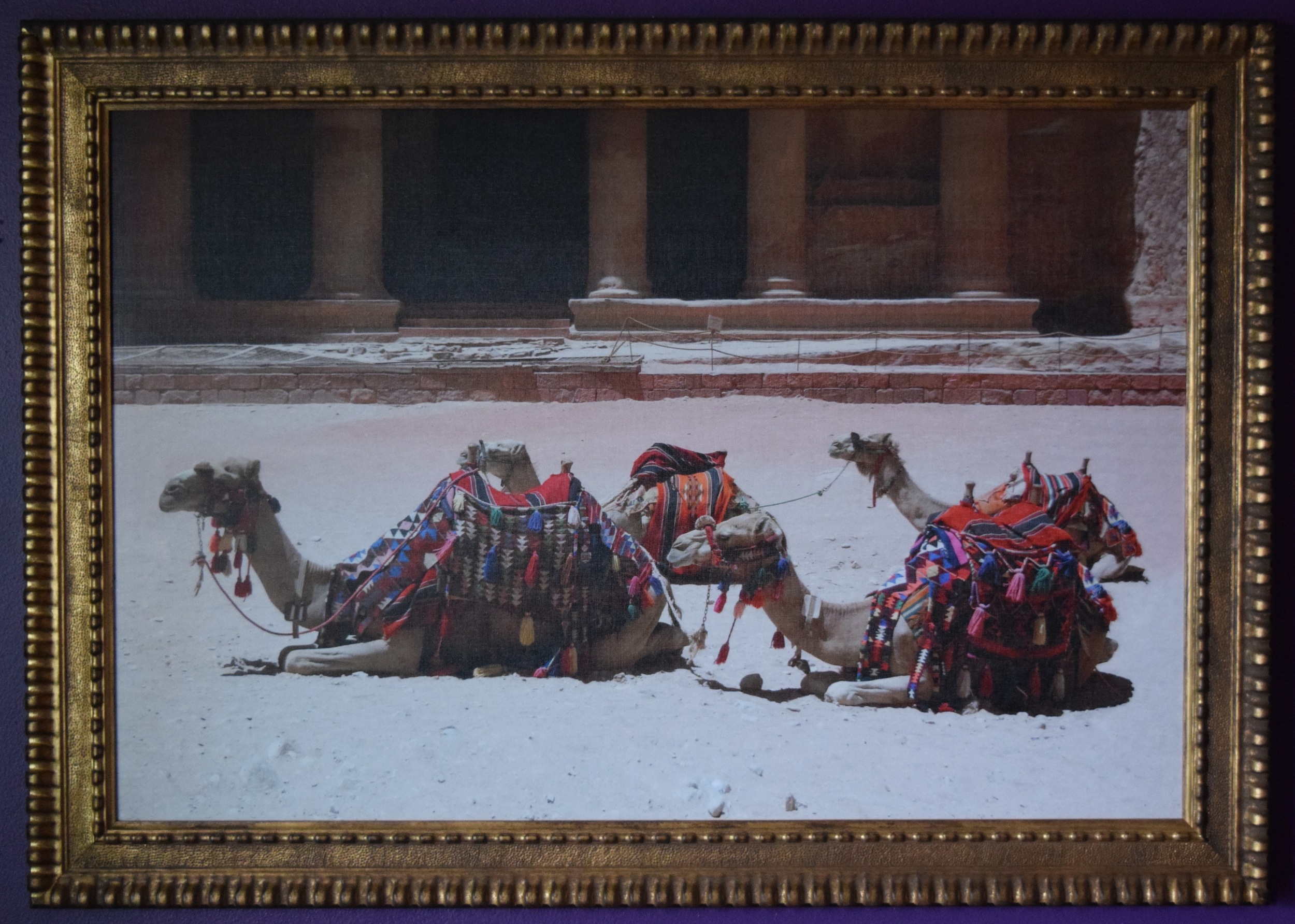 Camels-Petra, Jordan