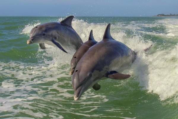 Rare-dolphin-stampede-shocks-whale-watchers.jpg