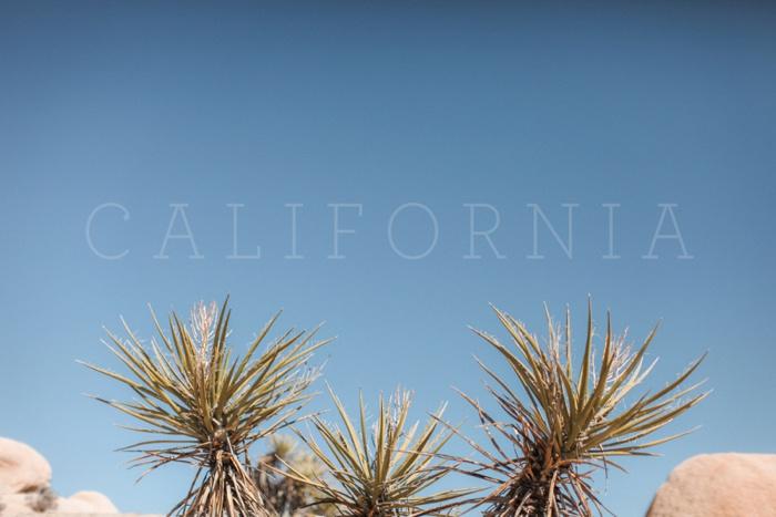 california vsco desert big sur redwood forest travel photography