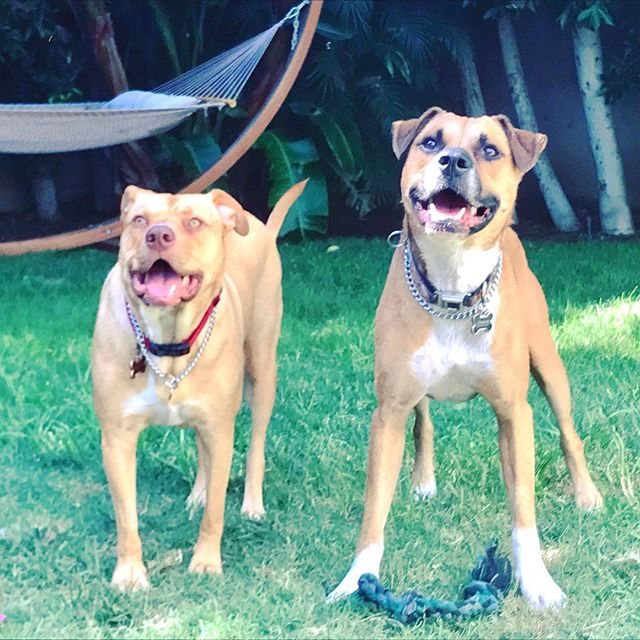 These are my dogs. Dakota and Parker. They're a hand full but also awesome. Woof woof.