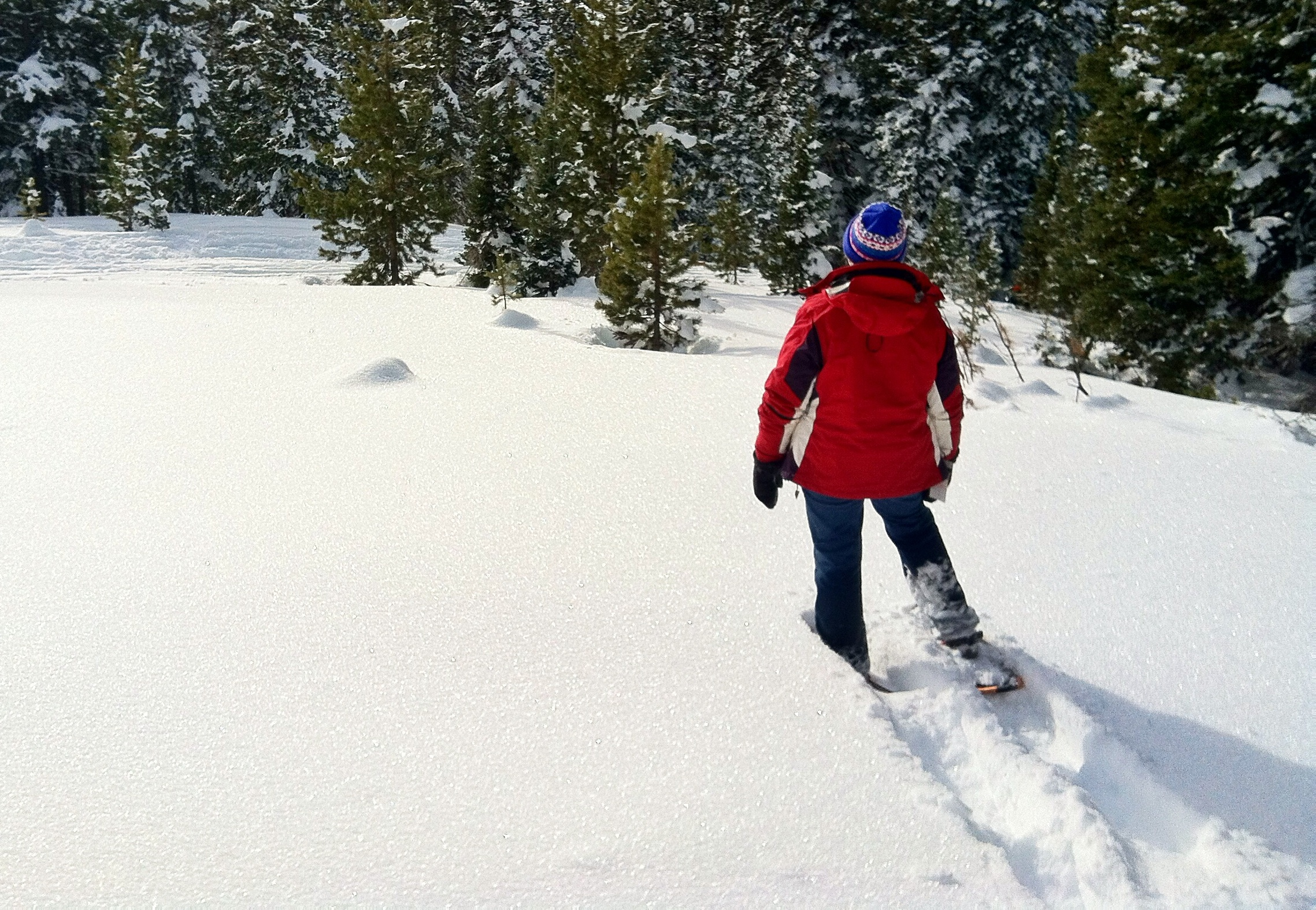 Snowshoeing at Rabbit Ears Pass