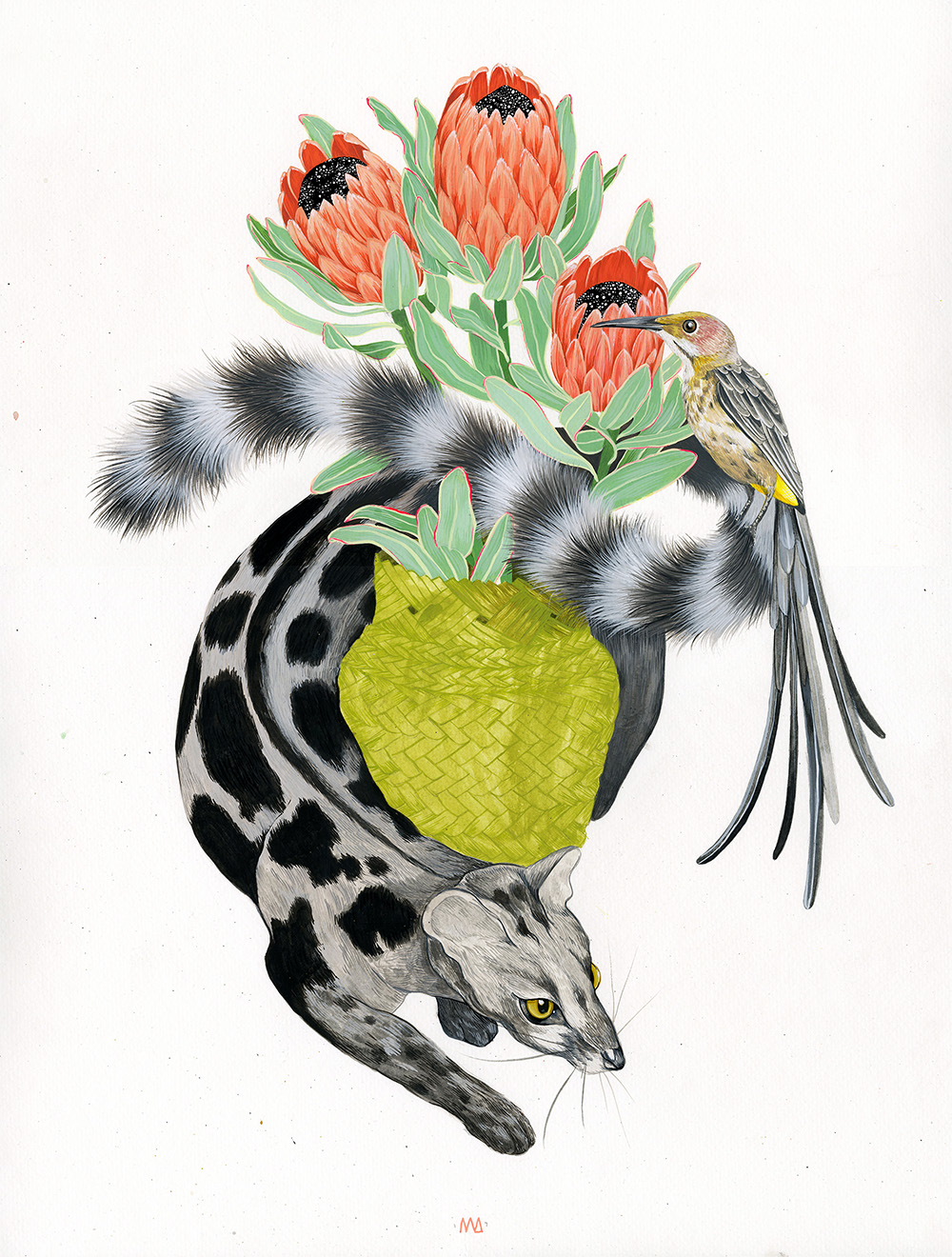 Proteas Pollinators - Gouache on paper - Available - contact ReliquaryTattoo@gmail.com for purchase inquiry