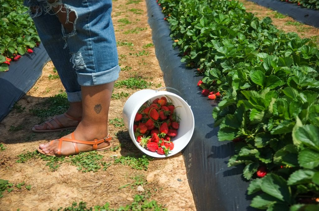 "Candra's strawberry tattoo. ""I always got strawberry cakes for my birthday every year,"" Candra said. It was her third tattoo and something familiar. She said she has ""strawberry legs,"" meaning her pores, similar to seeds, are visible."