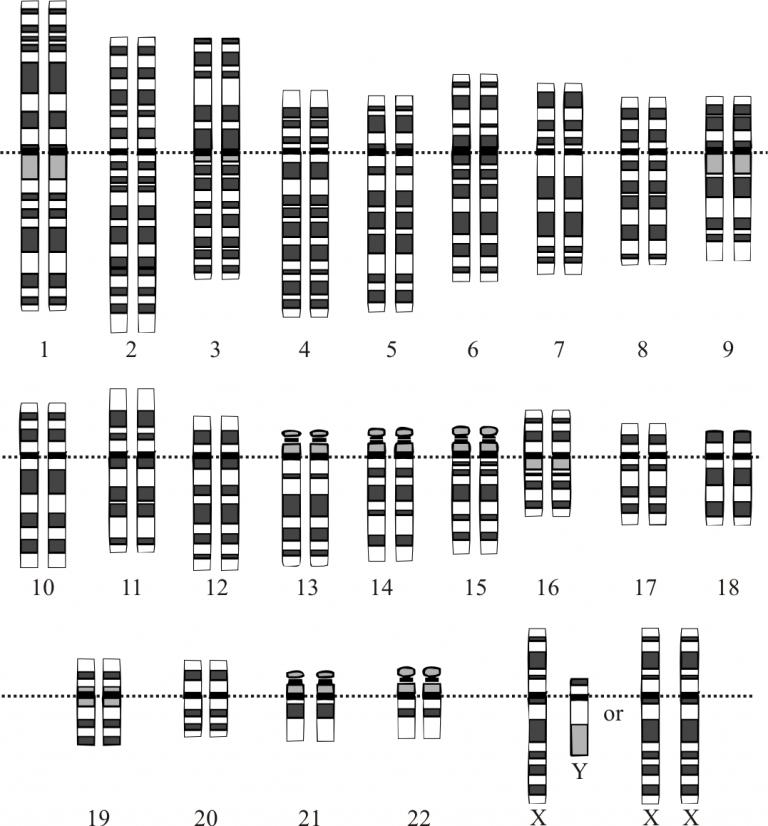 Human gene karotype (NIH)