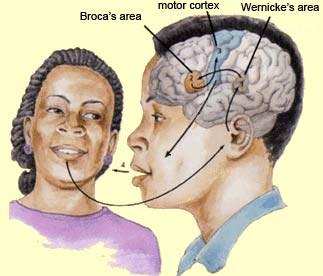 Illustration: Traditional notions of speech perception