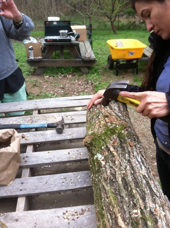 A community member taps a dowel into her                                      mushroom log.
