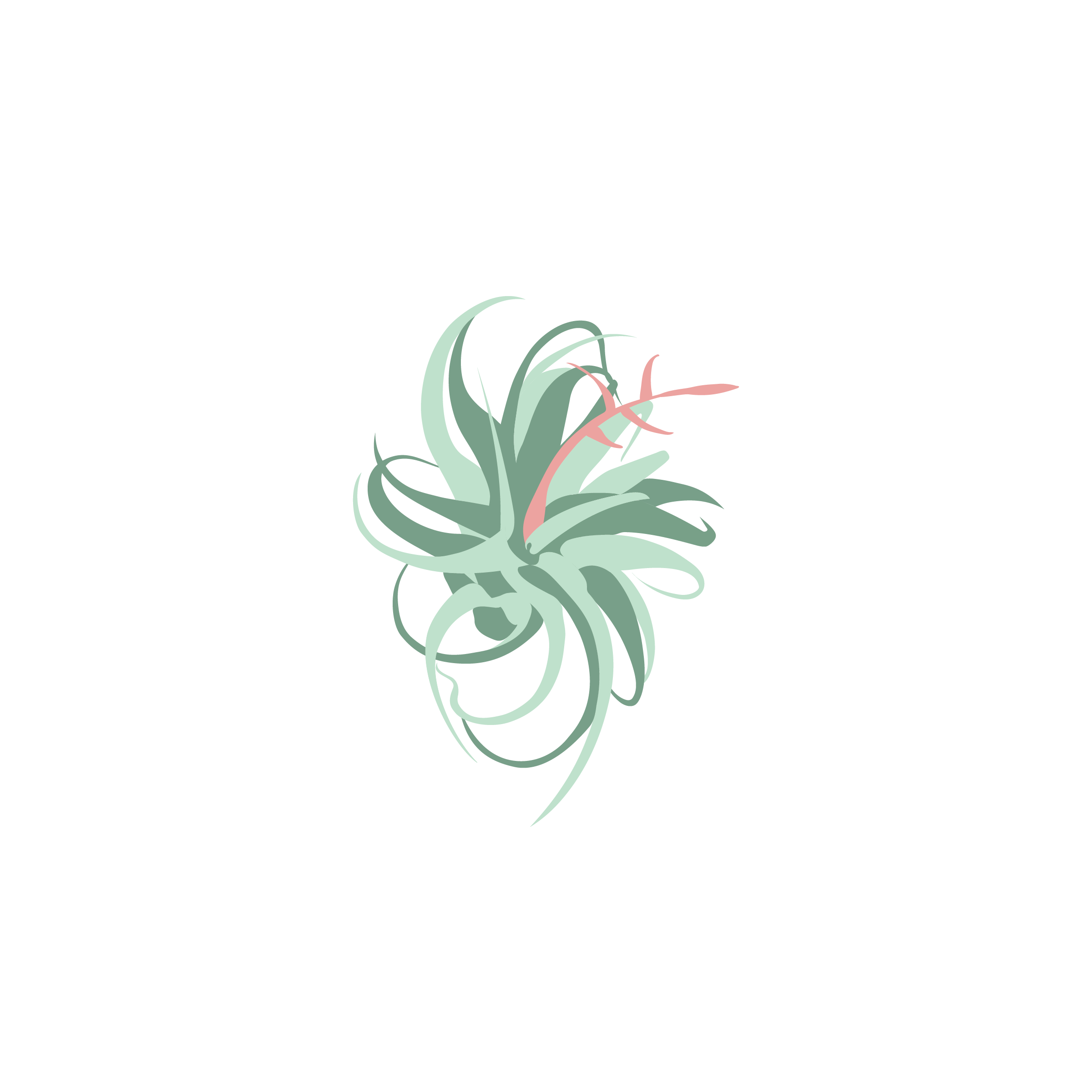Air Plant City Logo Images-13.png
