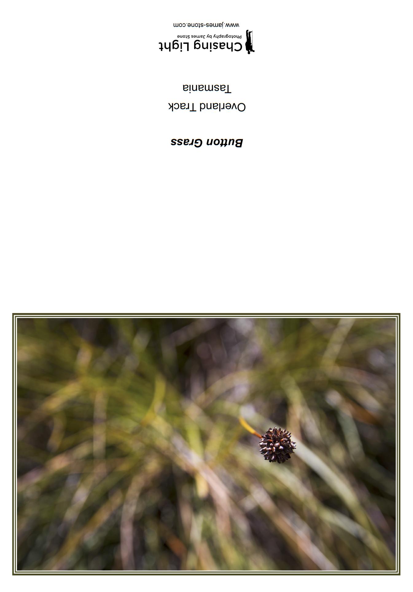 Button Grass.png