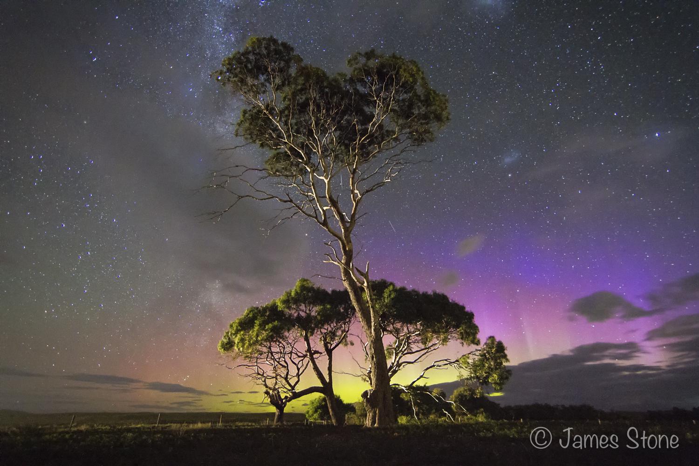 Australian Geographic - Gum Tree Aurora