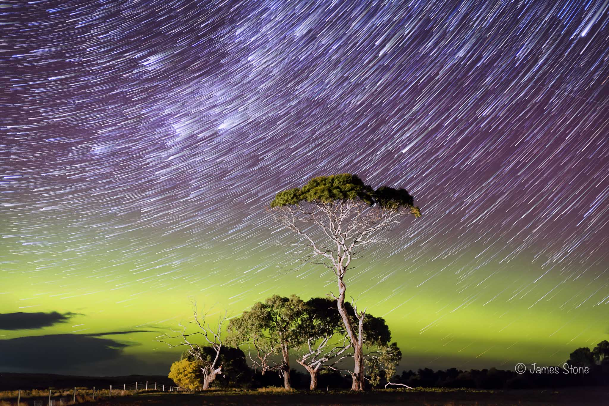 Aurora over Gum Trees