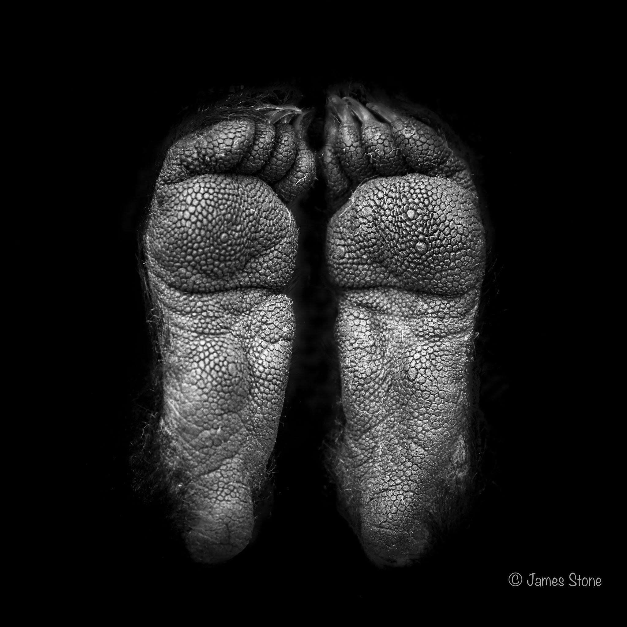 Devil's feet