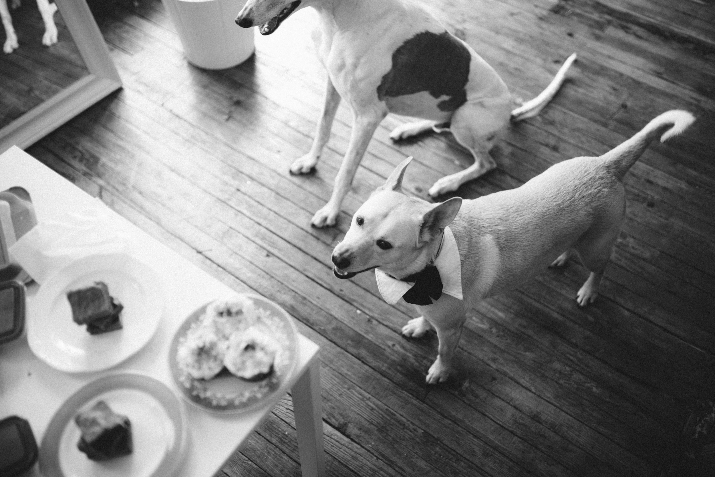 Barkday cakes_011 (1).jpg