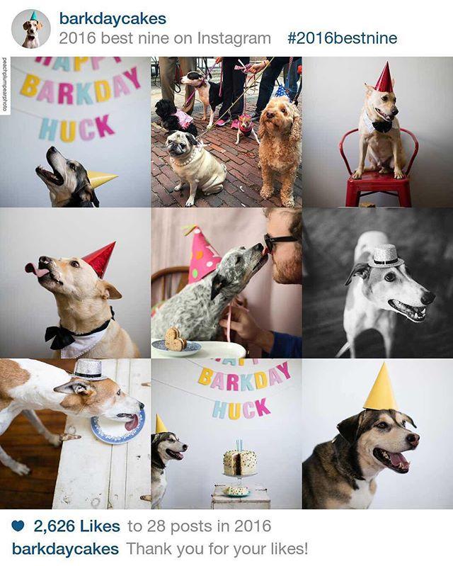 #2016bestnine #happynewyear #happybirthday #happygotchaday #adoptaversary #doggies