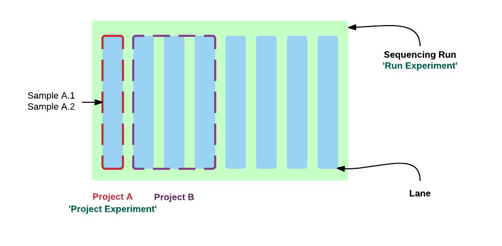 Gene Sequencing Run Breakdown