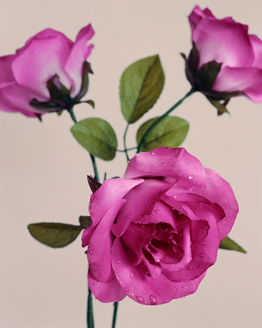 Roses  (from  Botanicals  series)  ,2014. 40 x 32 inches. Pigment print.