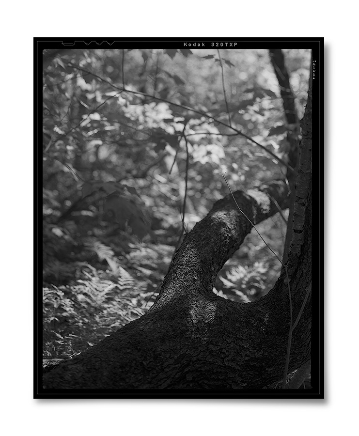 Those I Knew 20 ,    2015  . 4.5  x 5.5  inches. Silver gelatin contact print.
