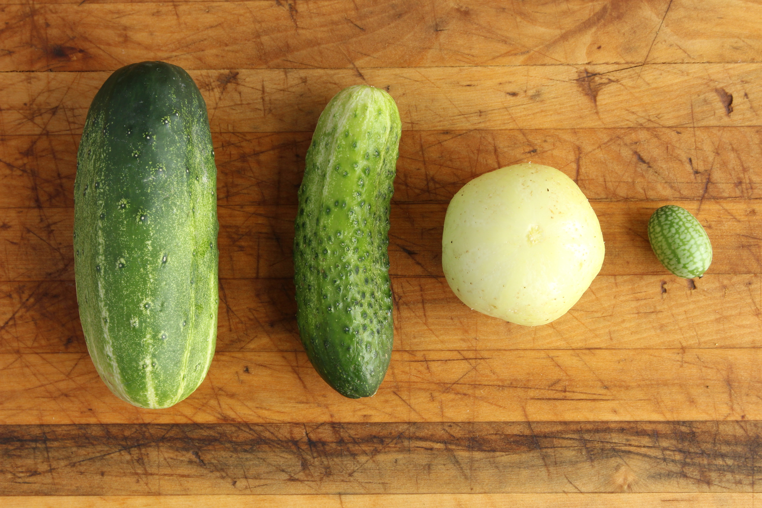Left: Pickling cucumber, english cucumber, lemon cucumber, and Mexican sour gherkin. Right: cucumber dice.