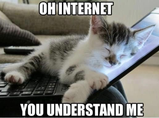 social%2Bmedia%2Bcats.jpg