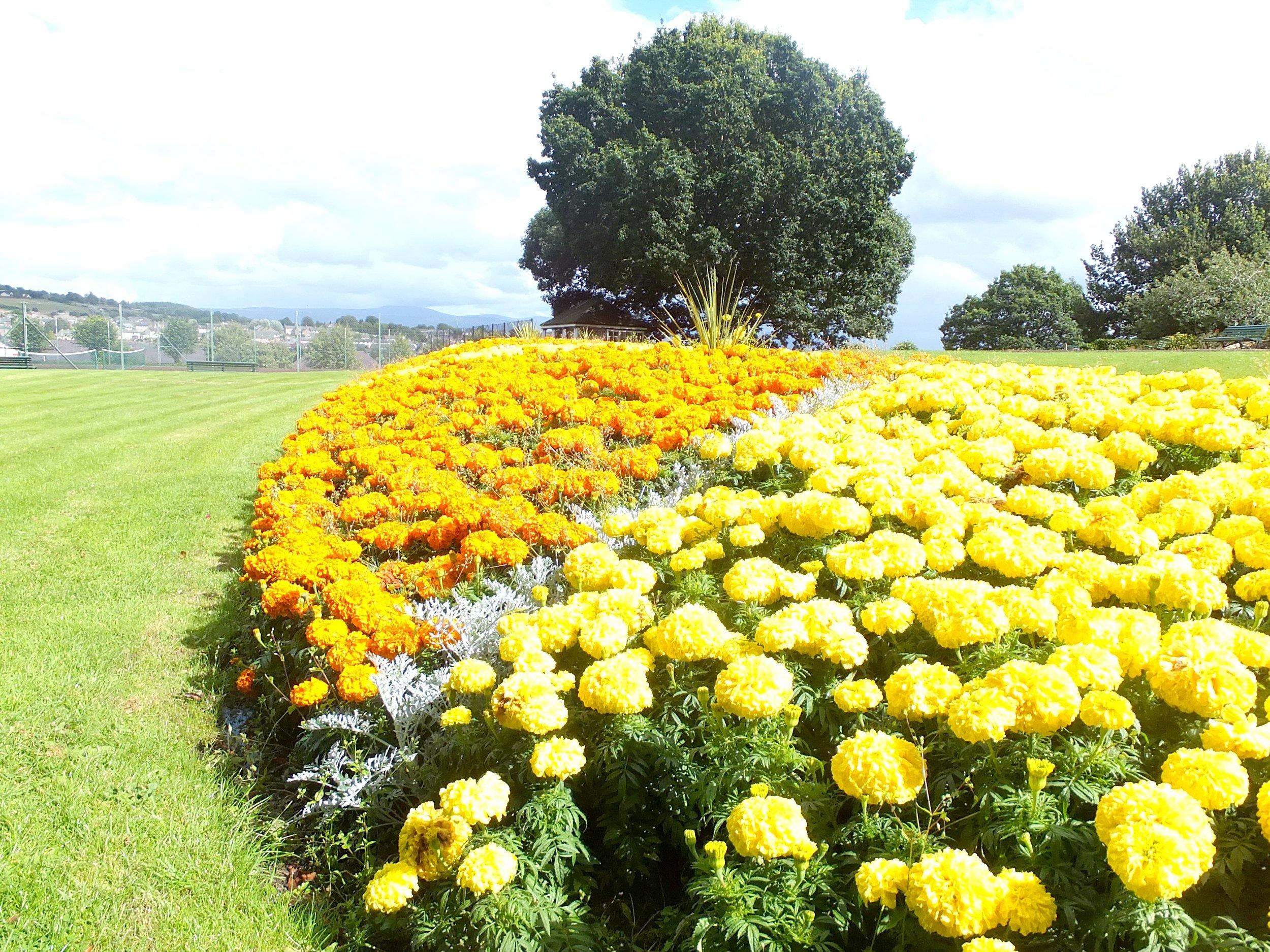 Flowers in Penrith