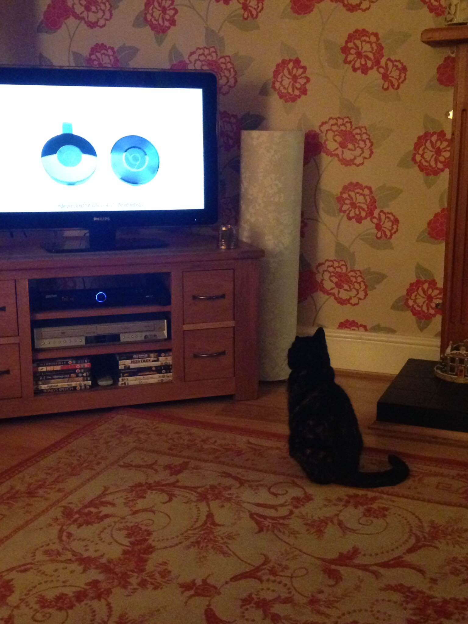 Bad lighting, but couldn't resist snapping this of Maisy really enjoying the TV!