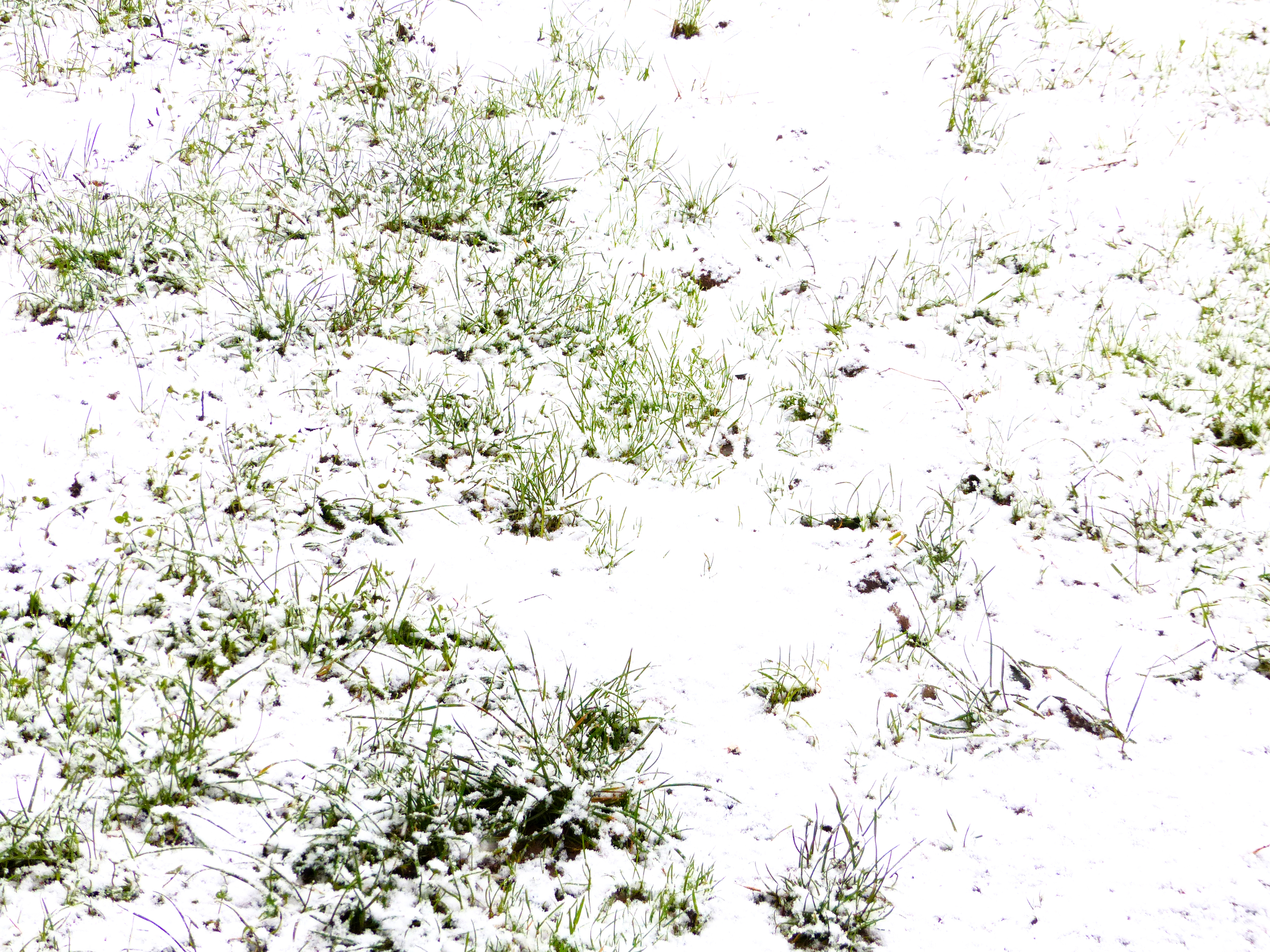 Walking in the Winter