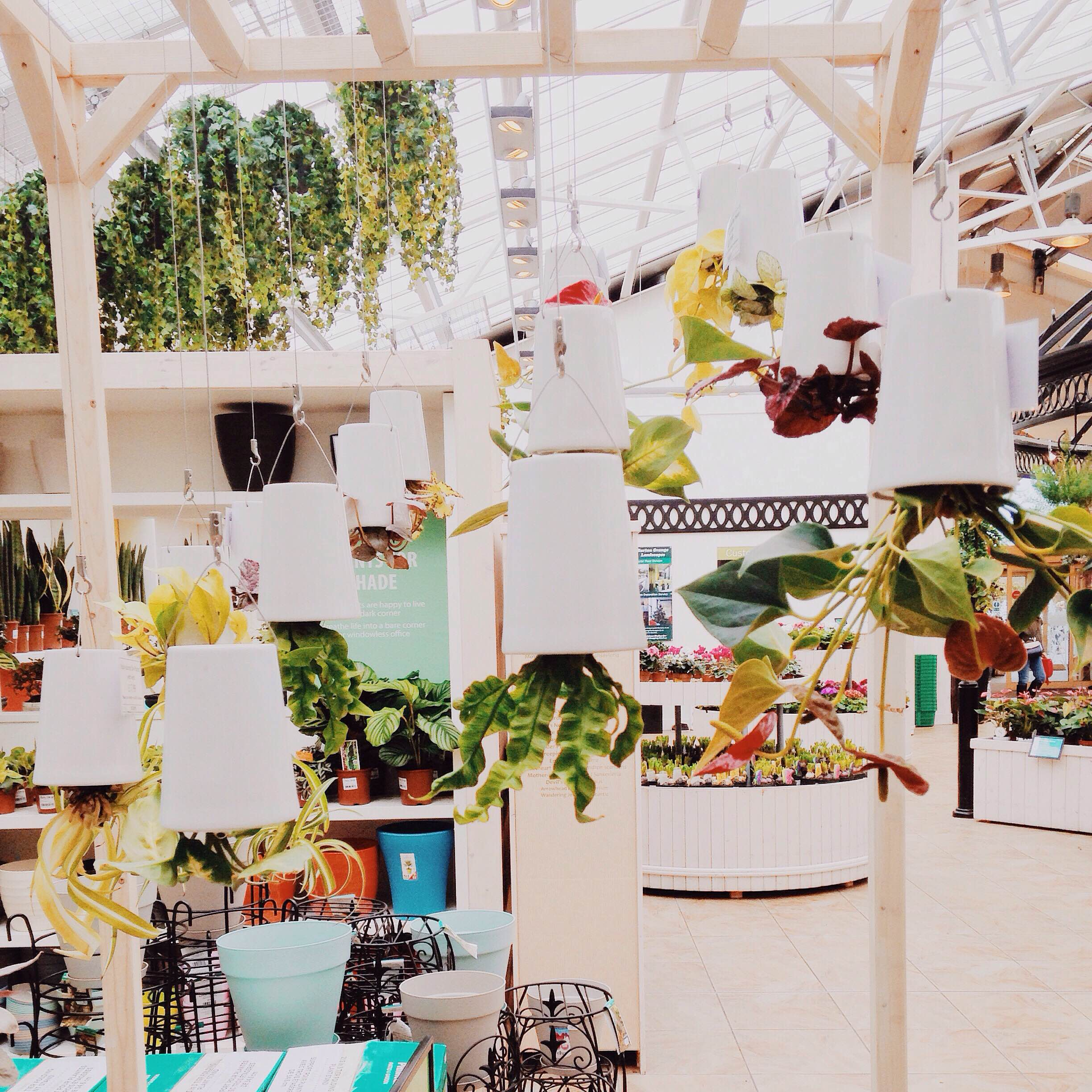 Upside down hanging plants at the garden centre