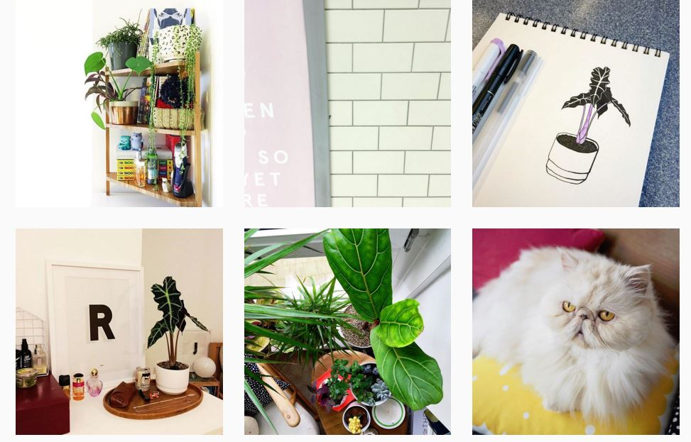 11 Irresistible Instagram Accounts to Inspire You