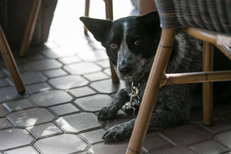 beanery-cafe-patio.jpg