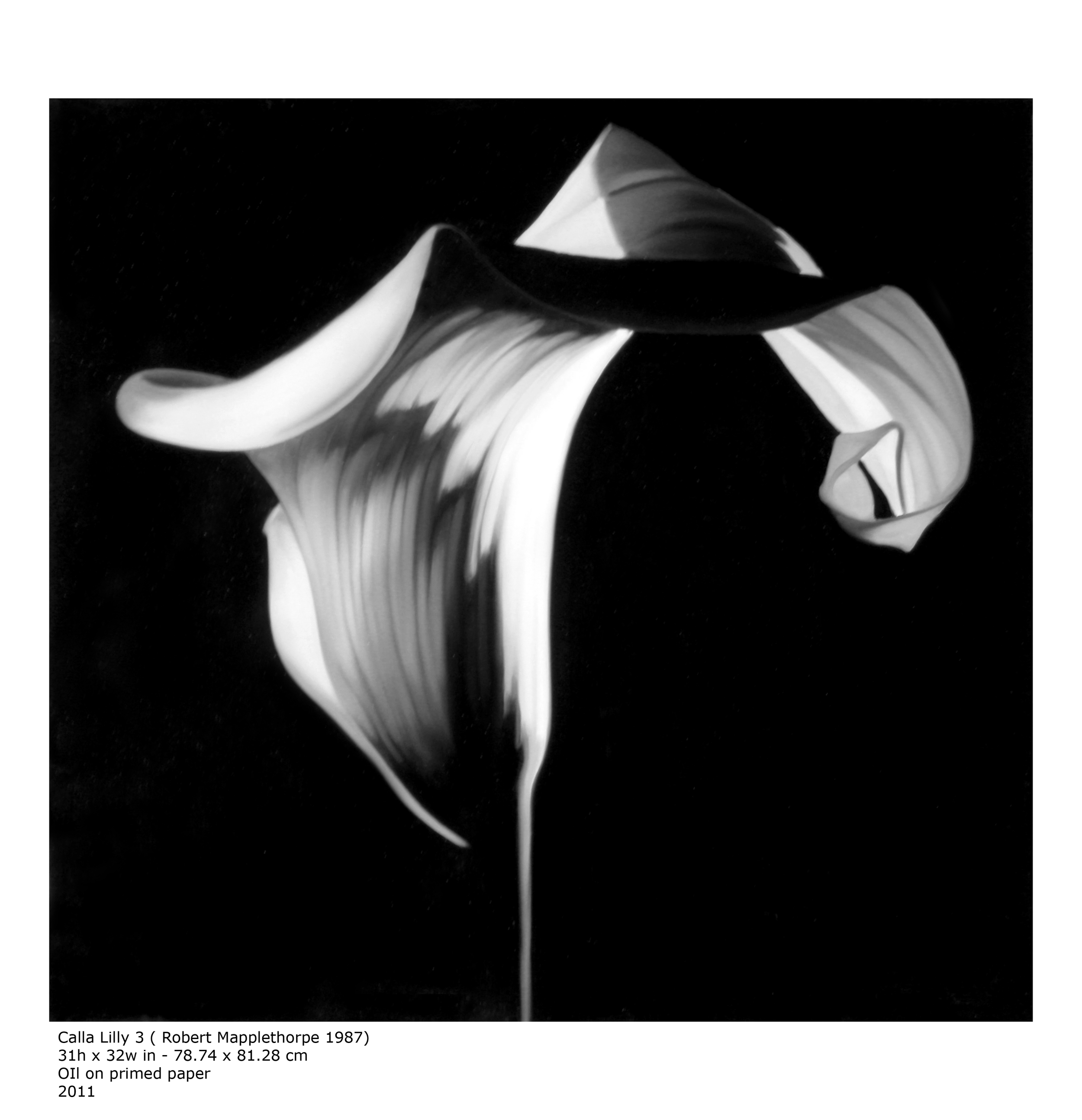 Calla Lilly 3 ( Robert Mapplethorpe 1987 )  Oil on Primed Paper - 37 x 31in - 2011