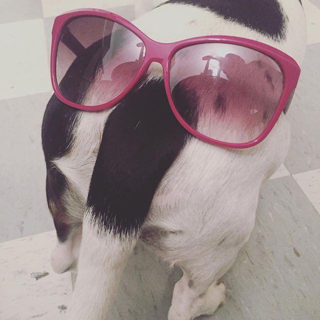 #ourdogchuy 😎