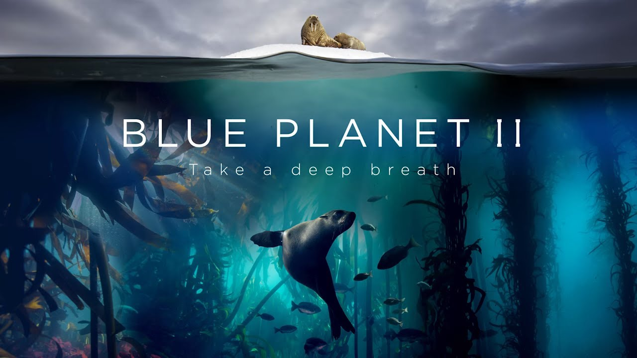 5. BLUE PLANET 2 - DAVID ATTENBOROUGH PUT OCEAN POLLUTION WELL AND TRULY ON THE MAP FOR THE MASSES