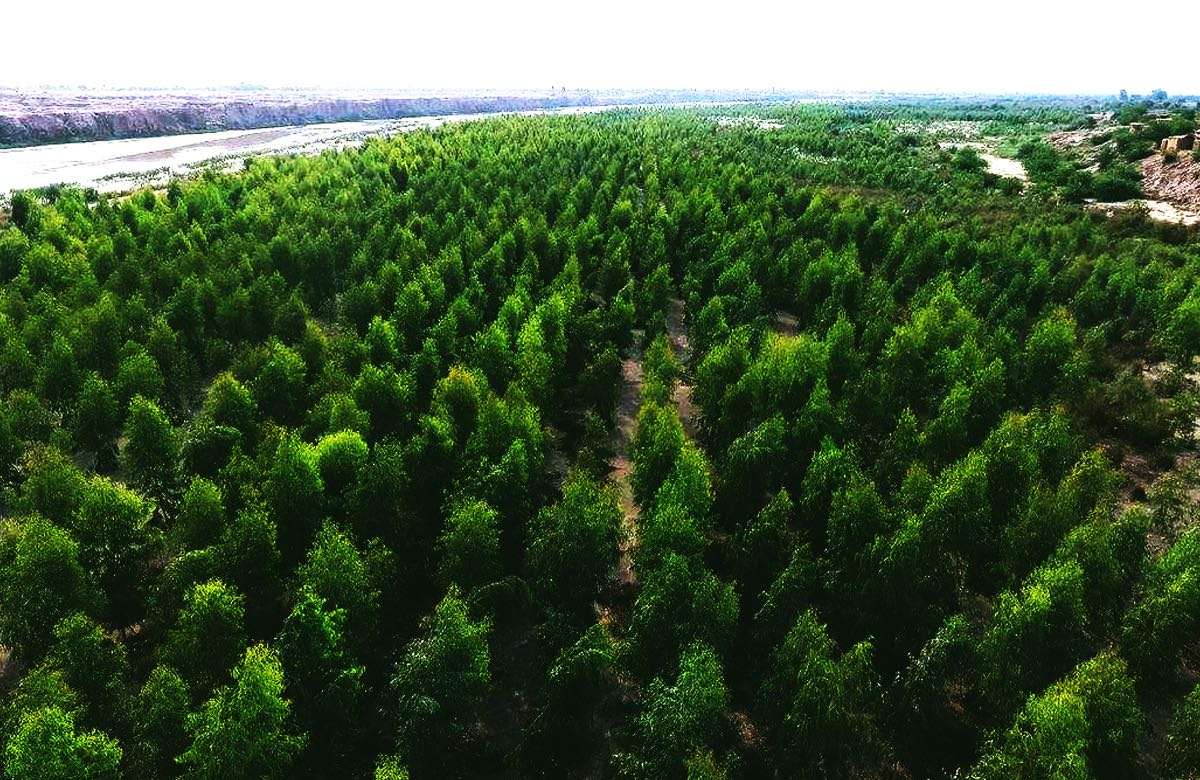 16. PAKISTAN IS PLANTING TREES - 10 BILLION TO BE EXACT!