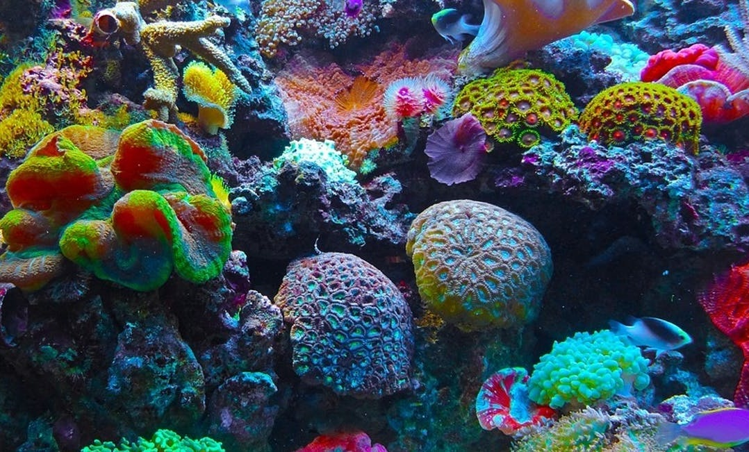12. HAWAII'S CORAL REEFS ARE SHOWING SIGNS OF RECOVERY - THERE IS HOPE YET FOR BIODIVERSITY IN THESE TROPICAL WATERS
